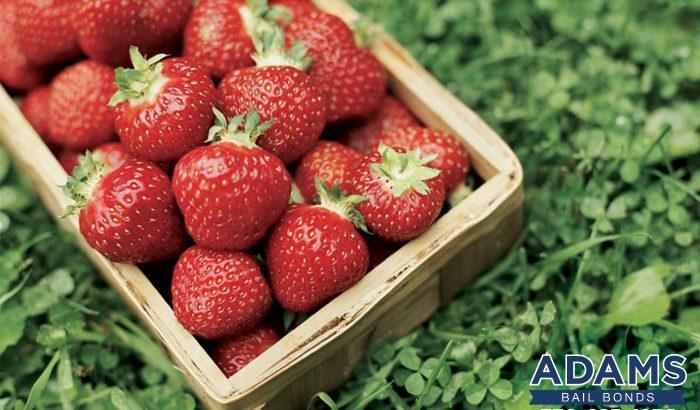 A Strawberry Catch
