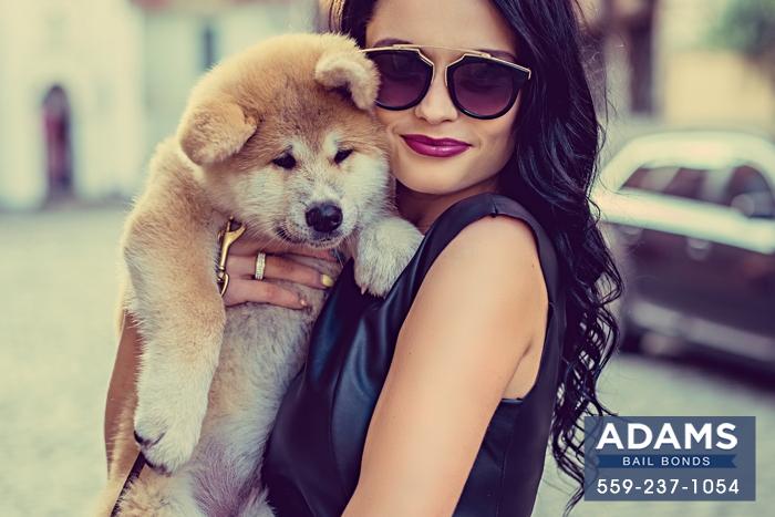 california-lemon-laws-for-dogs